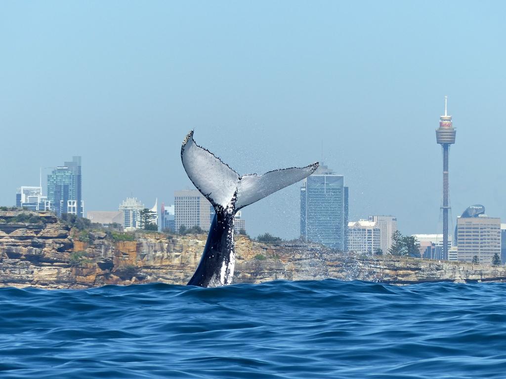 киты австралии фото статье видах